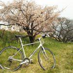 多摩川河川敷のポタリングで今年初の桜を観てきた
