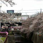 2018年春 池尻大橋から中目黒にかけて目黒川の桜を見てきた