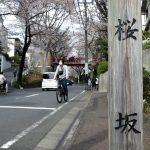 田園調布の「桜坂」で悲しみに似た薄紅色に触れてきた